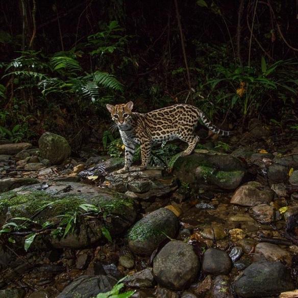 新手网赚:明星力Max!小李子环保组织向亚马逊雨林捐5百万